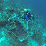 huge barrel coral