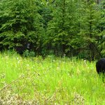 bear and cubs on Stewart-Cassiar Hwy