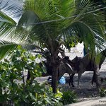 Playa Manuel Antonio Horse Back riding