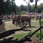 Слоны, на огромнейшей территории