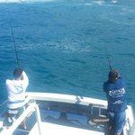 stick baiting