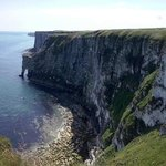 Bempton Cliffs viwed from Staple Newk