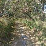 Willow walk way