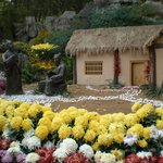 Chrysanthimum display in Baolu Spring Gardens, Jinan
