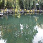 Goldfish in Baolu Gardens