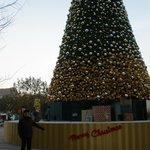 Christmas Tree in Jinan