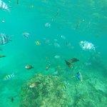 Safari blu! Snorkeling tra pesci stupendi