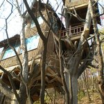 Tree House in Red leaf Mountain Park