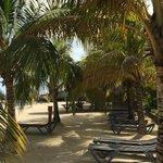 Shaded beach area