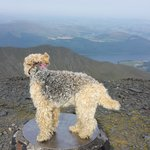maggie the lakeland at the summit