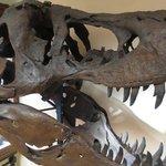 réplica de crânio de Tiranossauro Rex.