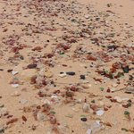 "Sea Glass beach  ""East Side"""