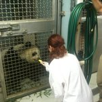 Feeding Panda at Zoo Atlanta.