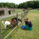Feeding the goats at Poco Loco