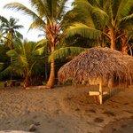 Les bungalows sont cachés derrière les palmiers