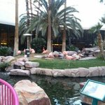 Flamingo Habitat