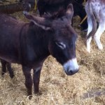 Adorable donkeys
