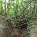 mystical scenes - where's Morgana?