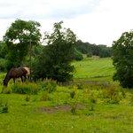 Horses grazing in hotel grounds