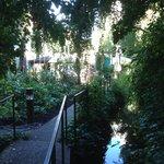 Le jardin et son ruisseau... juste une toute petite partie