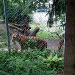 Walter Zoo Gossau