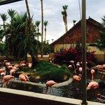 Pink flamingos next to patio. Gorgeous!
