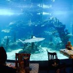 Dinner with a show!!! Lots of sharks.