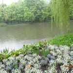 A lagoa do parque.