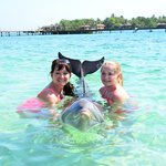 """""""meeting"""" one of the dolphins before we snorkeled"""