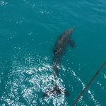 A friendly Dolphin off our bow