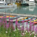 Thh harbor and the kayaks