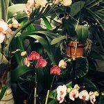LOUIS GINTER GARDENS & FLOWERS