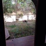 Kudu dalla stanza