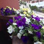Flores da sacada.