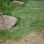 A chipmunk by the creek