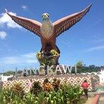 The Brahminy Kite or reddish brown sea eagle