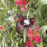 Photo from the Butterfly House