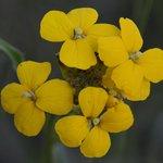Wildflower, RMNP