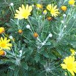 Flower in bloom in the Sinkhole garden