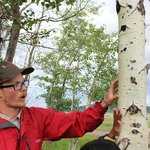 The fabulous Trevor, explaining the bark of the aspen