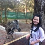 Visit from the local Zebra`s