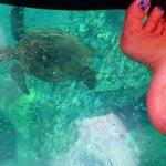 Easy to see sea turtles and sea life through clear bottom. My kids loved it!