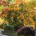 colourful shrubs