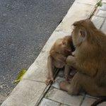 Monkey babies :)