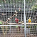 Some of the parrots