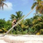 Покоряем Доминиканские пальмы.