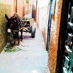 Припаркованный ослик в переулке перед риадом