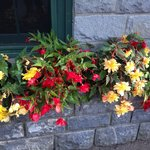 Begonias around the lobby.  They trim and keep them at their best!