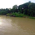 Elefantes refrescandose en el rio!!