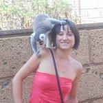 lemuriens monkey park